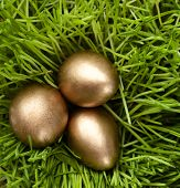 picture of chucky  - Three golden eggs are in the green grass - JPG