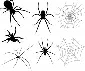 pic of black widow spider  - Vector Set of Spiders and Webs that are totally custom - JPG