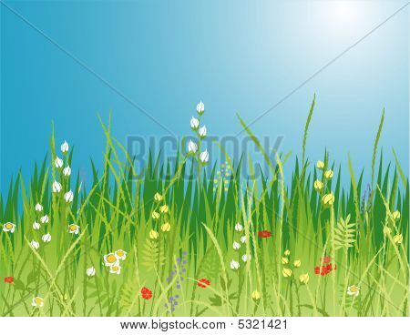 Spring. Flowers & Grass - Vector