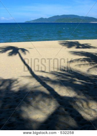 Palm Tree Shade On Beach