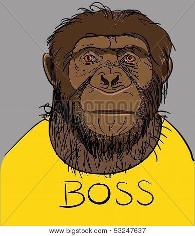 serious monkey