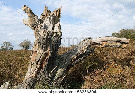 Tree Stump In A Dune Landscape.