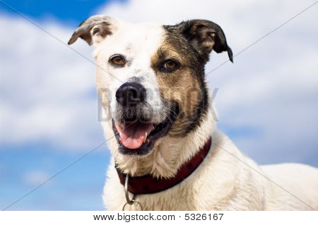 Smiling Dog Against Sky
