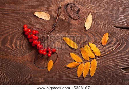 Rowanberry And Leaves