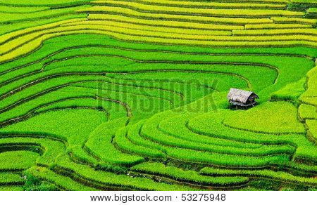 Beautiful terrace rice field with small house