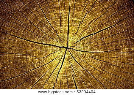 Tree Cross Cection