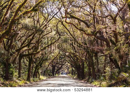 Trees tunnel -Botany Bay,South Carolina