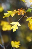picture of meadowsweet  - autumn berries - JPG