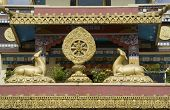 pic of dharma  - Buddhist icons deer and Dharma Chakra at Namdroling Monastery in Bylakuppe near Kushalnagar Mysore District Karnataka India Asia - JPG