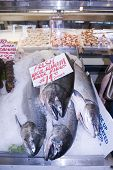 stock photo of klamath  - Close up on the fresh whole Klamath River Kings for sale on a fish mongers market stall at Pike Place Market, Seattle, USA