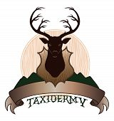 stock photo of taxidermy  - Illustration of a taxidermy design template - JPG