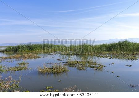 Marshes Of Lake Chapala In Mexico