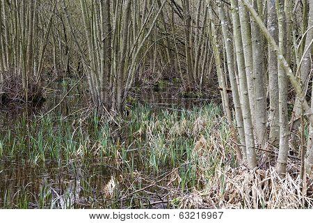 Forrest Swamp