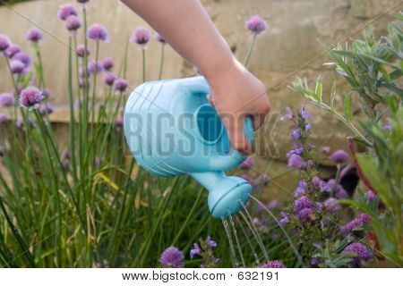 Childs Hand With Watering Can