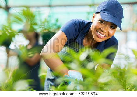 young african female nursery worker working inside greenhouse