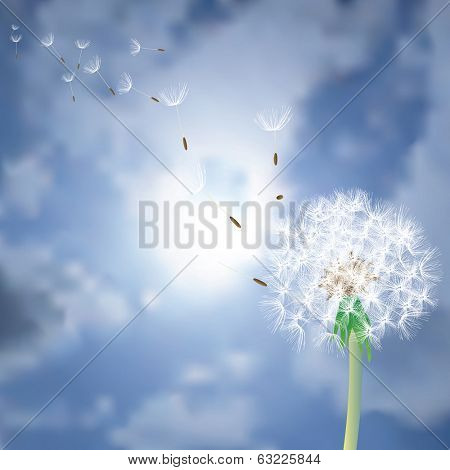 vector dandelion with flying seeds over the sun