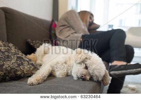 Sleeping Dog, Sleeping Owner