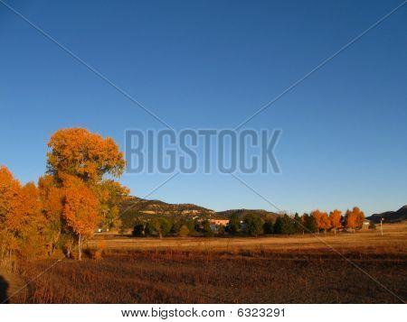 Autumn foliage at sunrise in high desert.