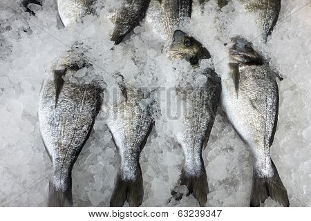 Fresh Whole Tilapia Fish