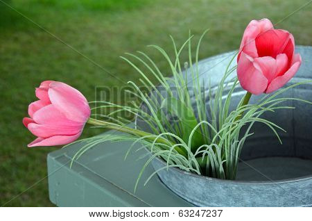 Two Pink Tulips In Bucket