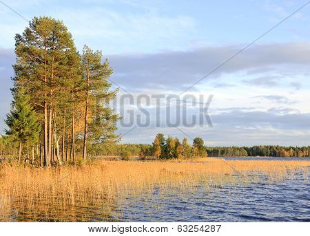 Forest lake in the taiga.