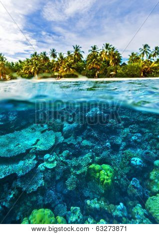Beautiful marine life, abstract natural background, gorgeous coral garden underwater, tropical island with palm trees forest, beauty of wild nature