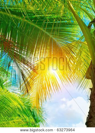 Fresh green palm tree leaves, bright yellow sun light through exotic foliage, beauty of tropical nature, summer holidays concept