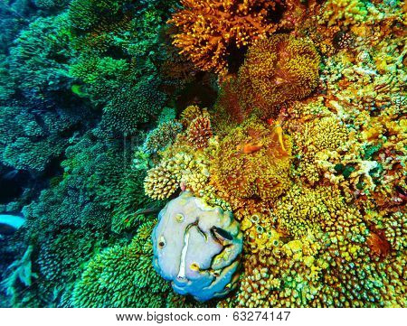 Underwater coral background, beautiful colorful coral garden, wonderful marine life, beauty of wild nature concept