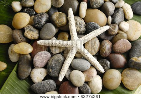 starfish on colorful stones texture on green leaf