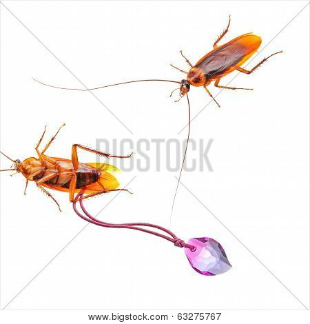 Cockroach With Crystal Jewel