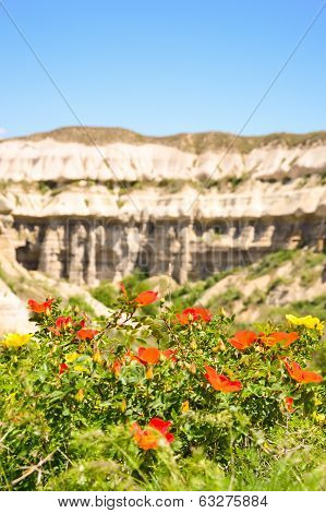 Flowers With Tectonic Lines In The Background