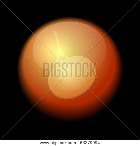 Human Fetus Inside the Womb. Vector
