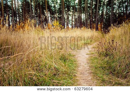 Path Through A Colorful Forest In Autumn