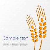pic of whole-wheat  - Vector background with ears of wheat eps10 - JPG