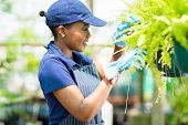 cute african female florist checking flowers condition in greenhouse