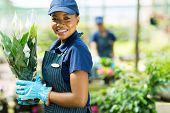 pretty african american nursery worker holding potted plant