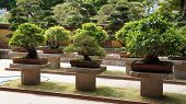 Bonsai trees in the park of Hong Kong