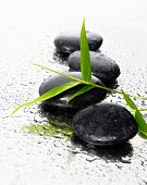 Black stones, and a sprig of green bamboo with wet