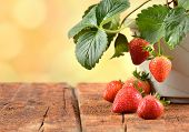 stock photo of strawberry plant  - Strawberry plants growing in a pot - JPG