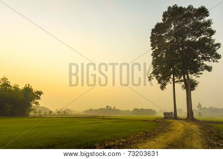 Rice Field in the Sunrise
