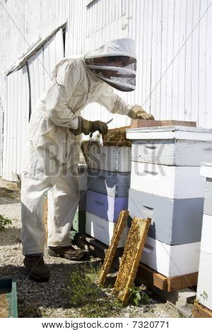 Beekeeper Working On Hives