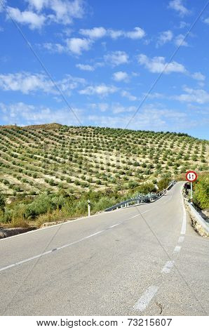 Rural road between olive trees in andalucia