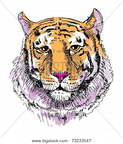 Artwork tiger, sketch drawing