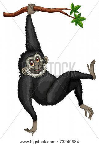 Illustration of a black gibbon hanging