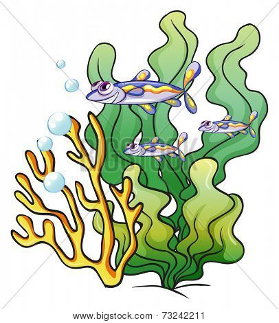 Illustration of the three fishes under the sea near the seaweeds on a white background