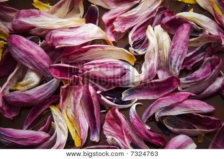 Background Of Petals