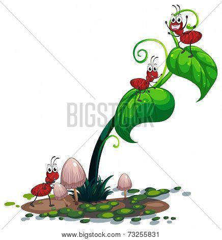 Illustration of a green plant with ants on a white background