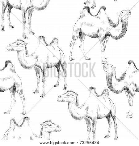 hand drawn camel