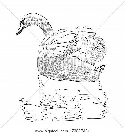 sketch swan