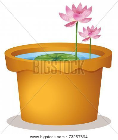 Illustration of a pot with a waterlily and lotus flowers on a white background